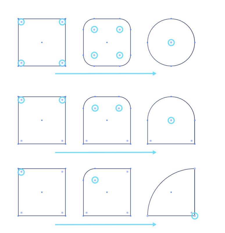 Illustrator_figure05